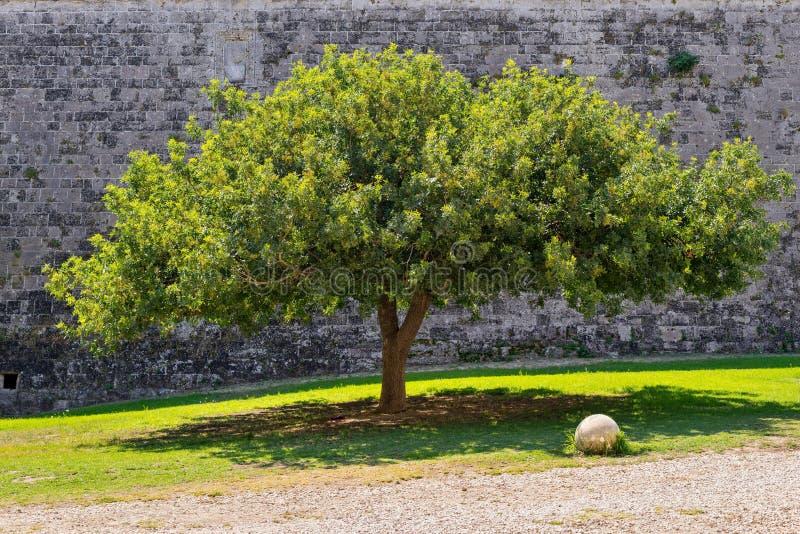Un arbre magnifique et mur en pierre photographie stock