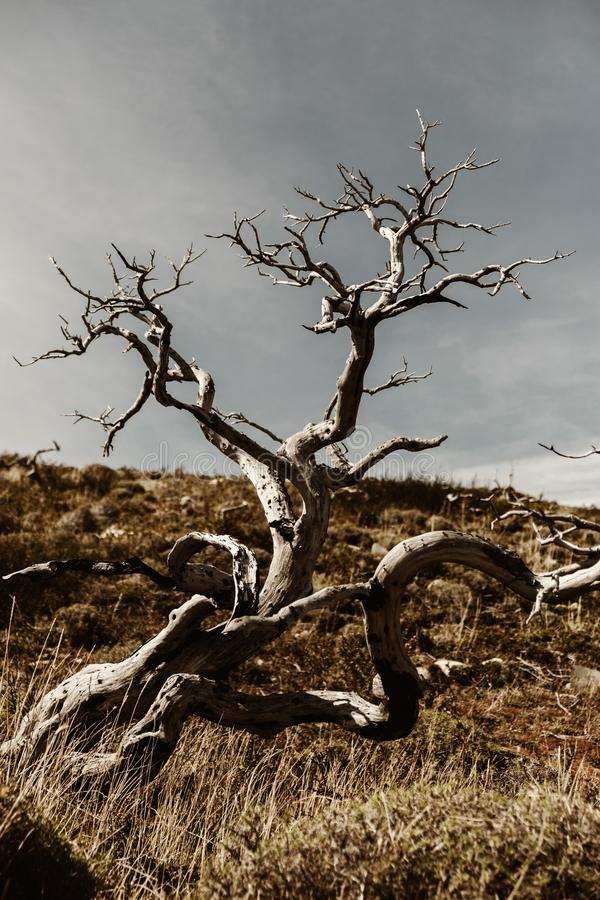 Un arbre mort en Torres Del Paine dans le Patagonia photographie stock