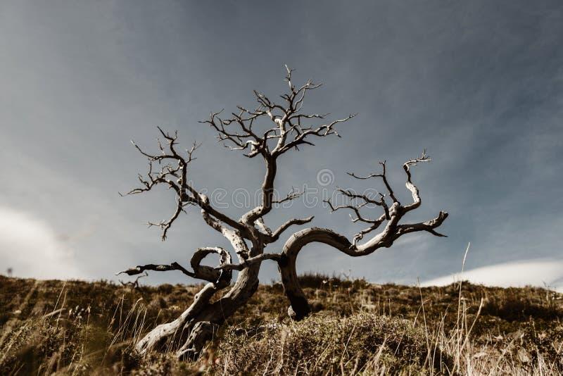 Un arbre mort en Torres Del Paine dans le Patagonia photographie stock libre de droits