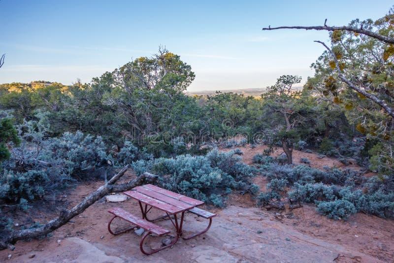 Un arbre noueux antique de genévrier près de parc Utah de monument de Navajo photographie stock