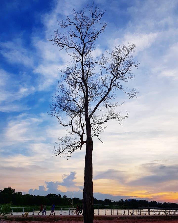 Un arbre nu se tient contre le ciel de coucher du soleil photo stock