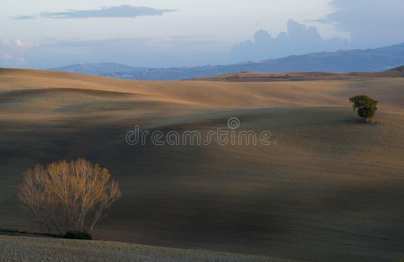 Un arbre pelucheux vert et un arbre avec les feuilles tombées au milieu du velours des collines toscanes fraîchement labourées av photo stock