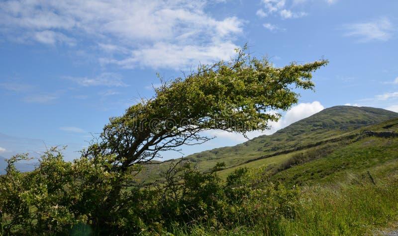 Un arbre plié par le vent photographie stock