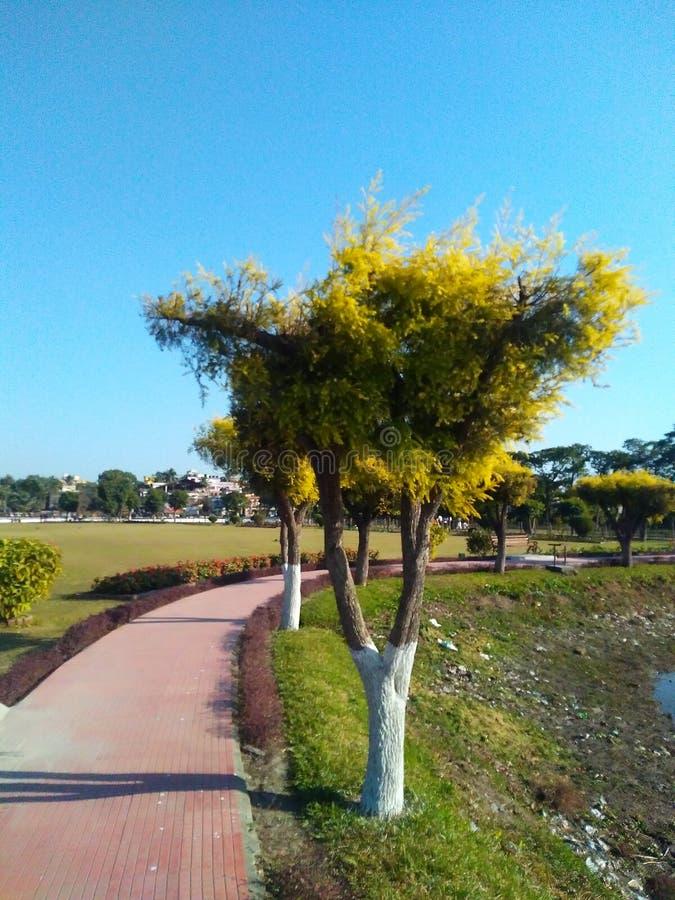 Un arbre près d'une route image stock