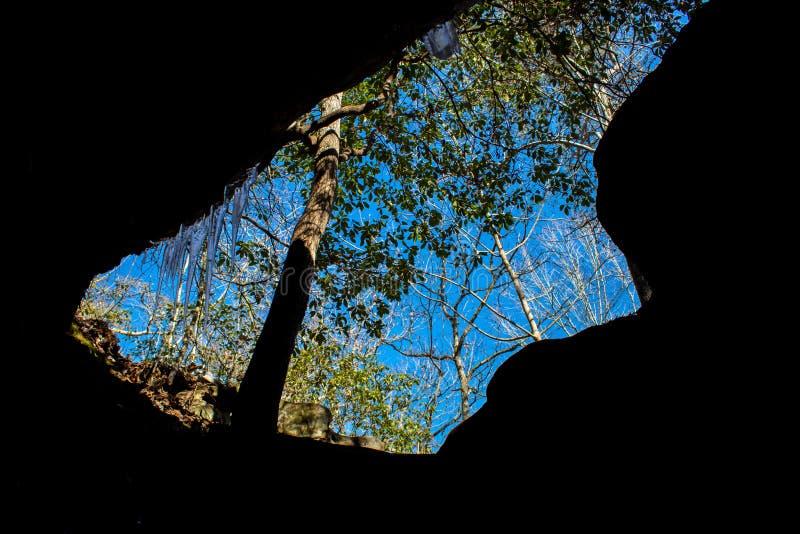 Un arbre s'élevant hors d'une caverne avec des glaçons photographie stock libre de droits