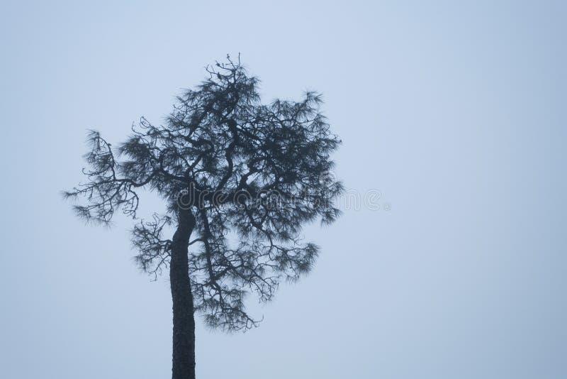 Un arbre se tenant dans un matin de l'hiver brumeux photographie stock