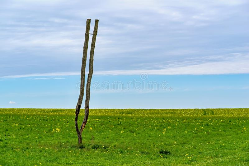 Un arbre sec abstrait sans branches et feuilles photos libres de droits