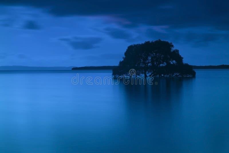 Un arbre simple dans l'eau photographie stock