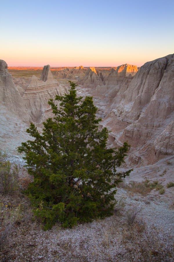 Un arbre solitaire de cèdre au parc national de bad-lands dans le Dakota du Sud photo libre de droits