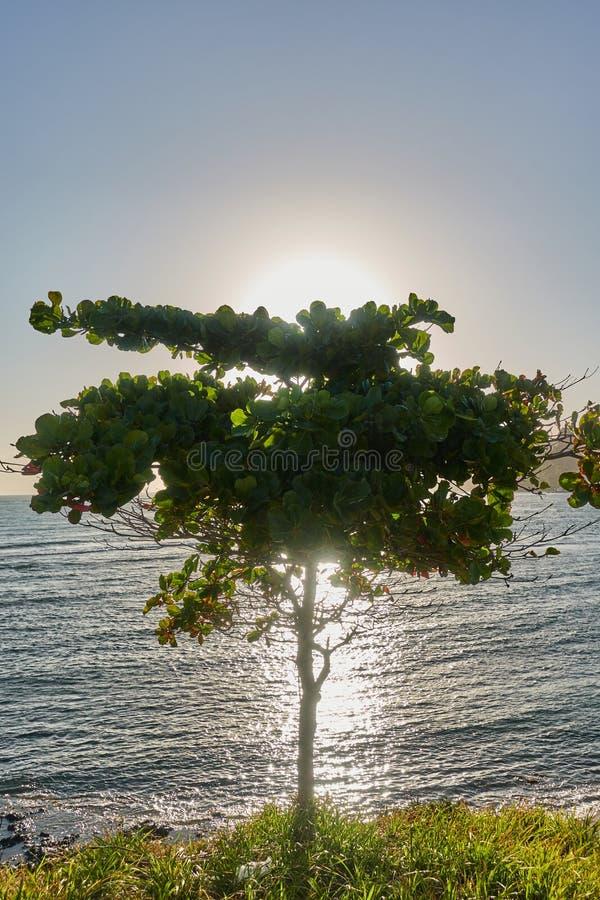 Un arbre sur la côte de l'océan dans les rayons du Soleil Levant Paysage marin photographie stock libre de droits