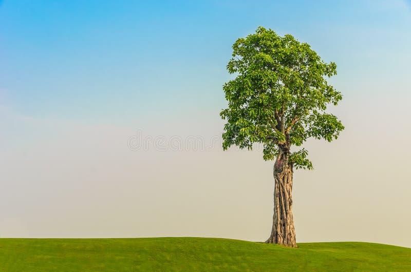 Un arbre sur la zone d'herbe en ciel de matin photographie stock libre de droits