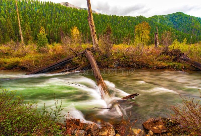 Un arbre tombé ne peut pas bloquer la rivière de St Joe, l'eau règne photos libres de droits