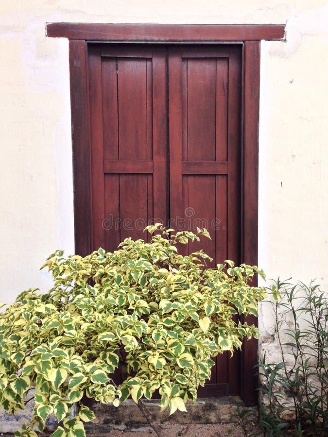 un arbre vert devant une porte en bois images libres de droits