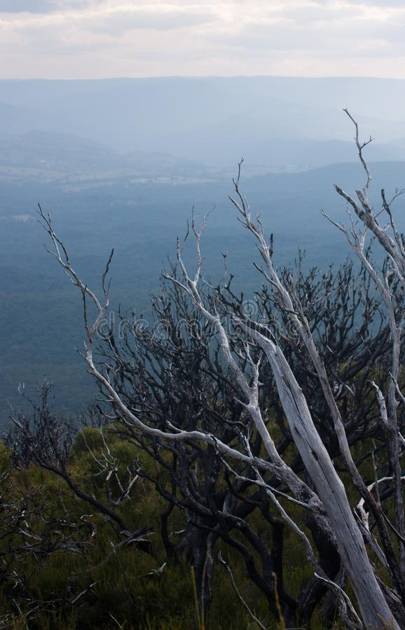 Un arbusto cerca del Cahill' puesto de observación de s en las montañas azules foto de archivo