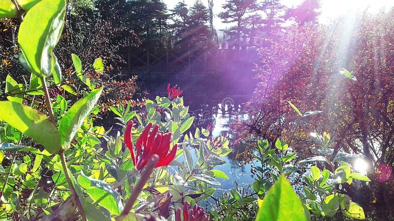 """Un arbusto hermoso florece en el otoño en la orilla de un """"del â del lago – 2 fotografía de archivo"""
