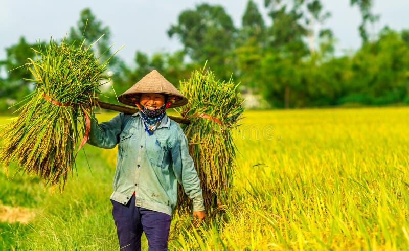 Un arroz que lleva de la mujer no identificada lía a casa feliz pues la cosecha es quanttitative imagen de archivo