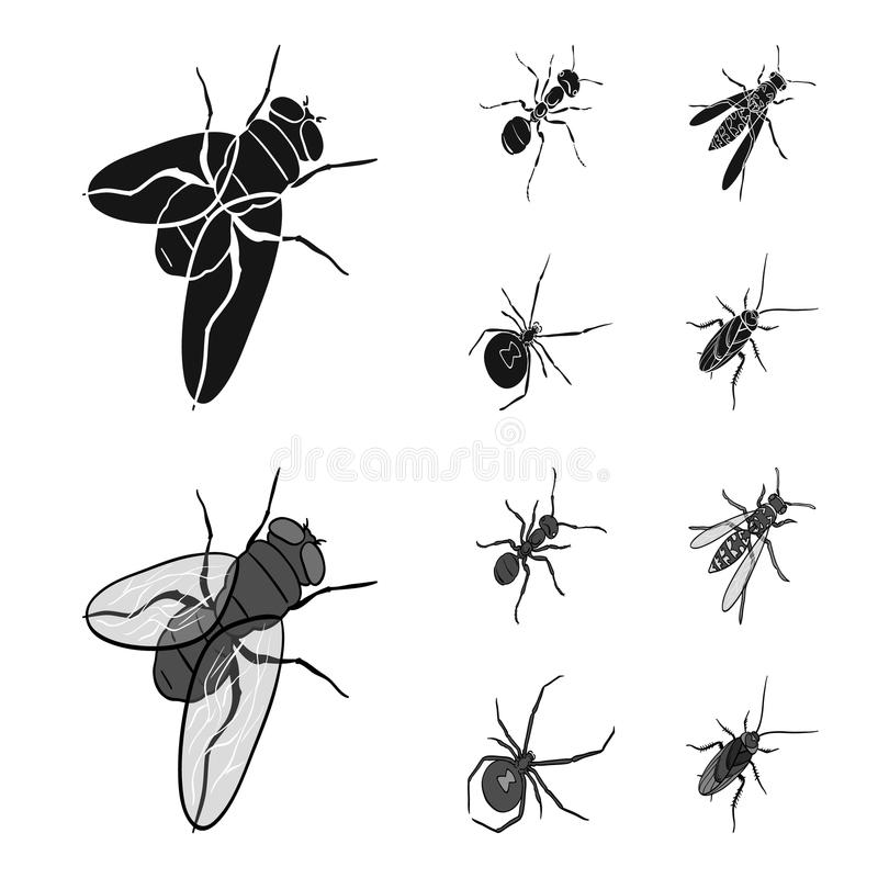 Un arthropode d'insecte, un osa, une araignée, un cancrelat E illustration libre de droits