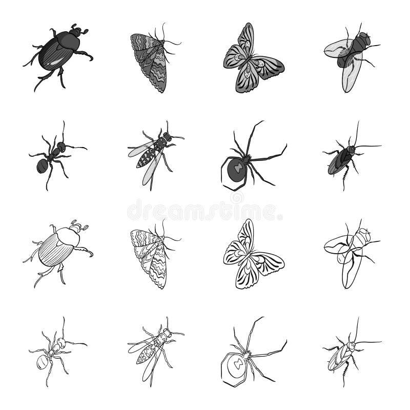 Un arthropode d'insecte, un osa, une araignée, un cancrelat Les insectes ont placé des icônes de collection dans le contour, vect illustration stock