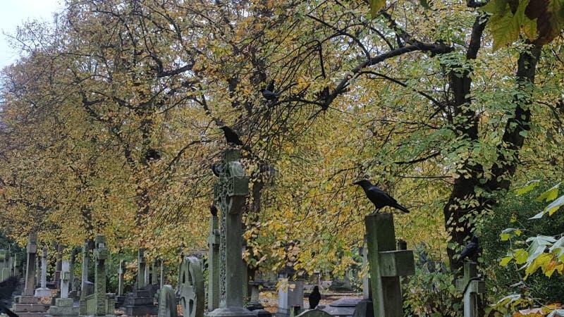 Un asesinato de cuervos imagenes de archivo