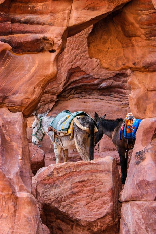 Un asino un mulo sta stando accanto a ogni altro in un incredi immagine stock