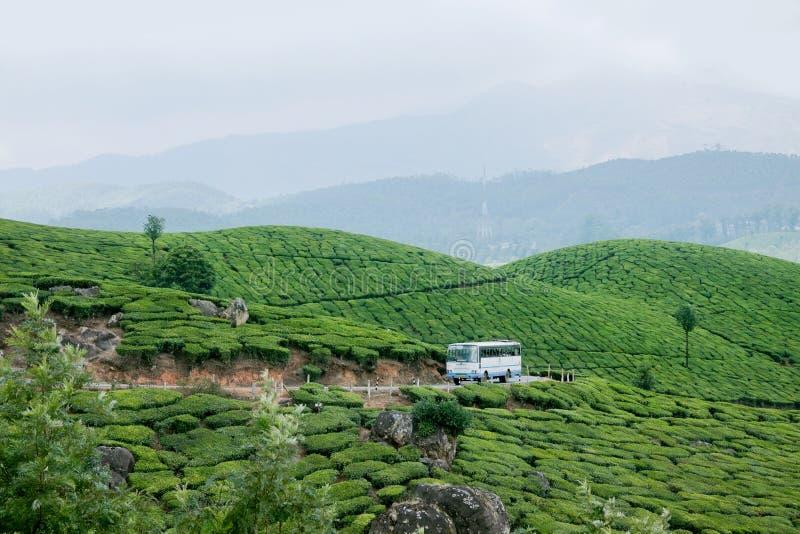 Un autobus passant par des plantations de thé de Munnar photo libre de droits