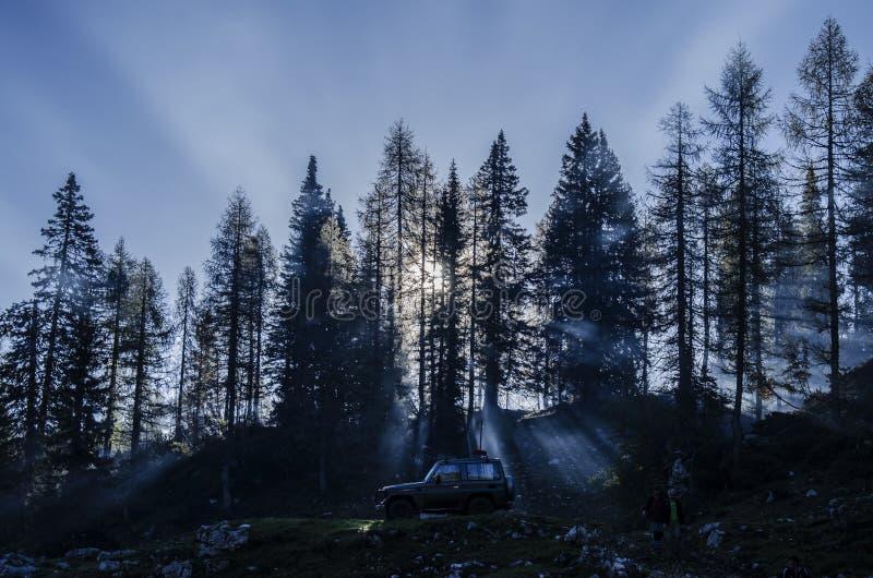 Un'automobile 4x4 in una foresta con gli alberi alti con luce solare che splende da parte a parte immagini stock