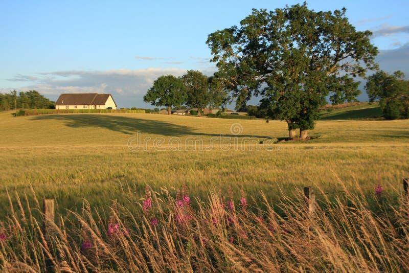 Un'azienda agricola, alberi e un campo di grano nel villaggio Stirling di estate fotografia stock libera da diritti