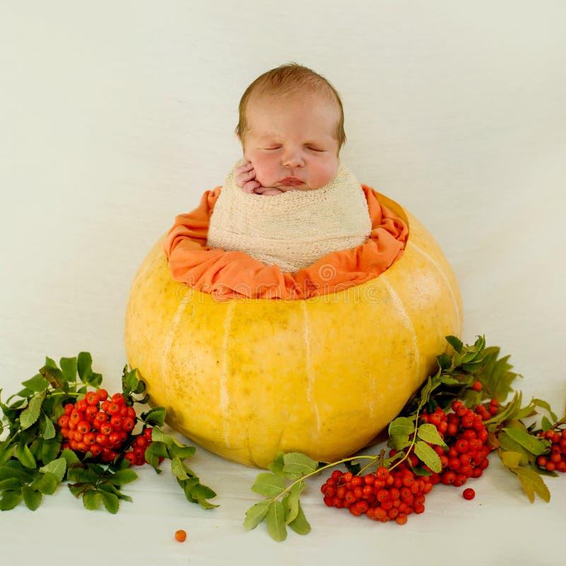 Un bébé nouveau-né s'assied dans une pose de cocon dans une composition en automne sur un fond blanc photos stock
