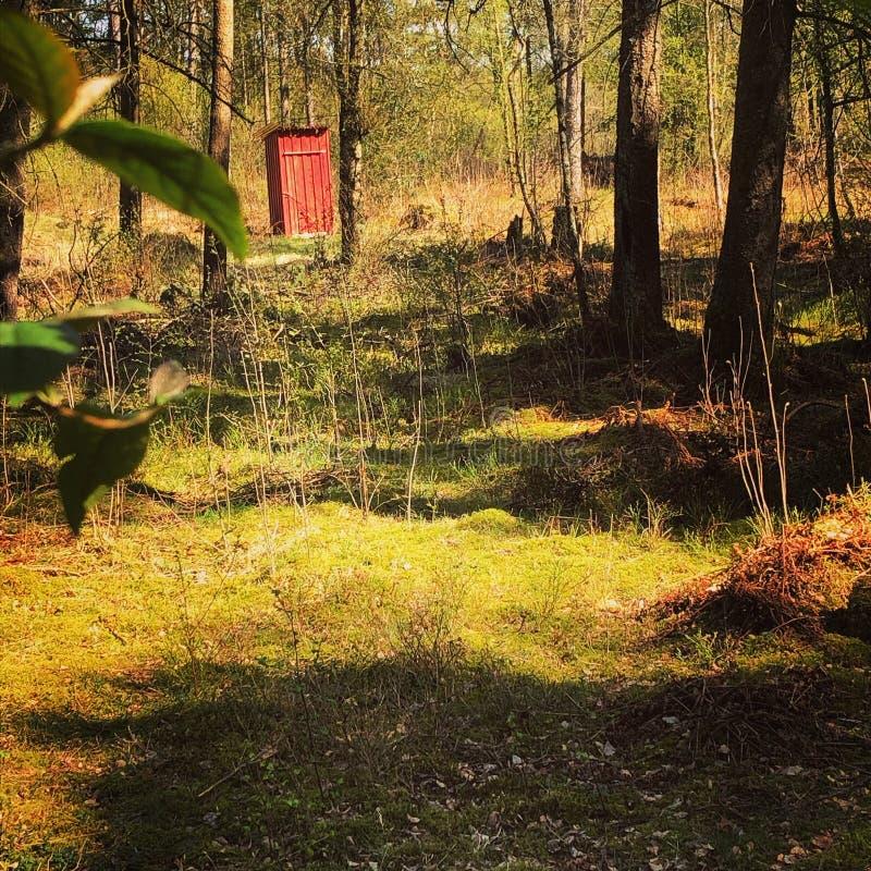 Un baño rojo en el bosque noruego imagen de archivo libre de regalías