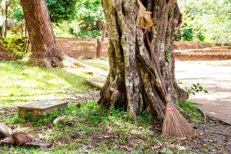 Un balai de paille a placé pour se reposer sur un grand vieil arbre dans le soleil de midi image libre de droits
