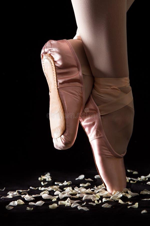 Un ballerino di balletto che sta sulle dita del piede sui petali rosa con backg nero immagini stock libere da diritti