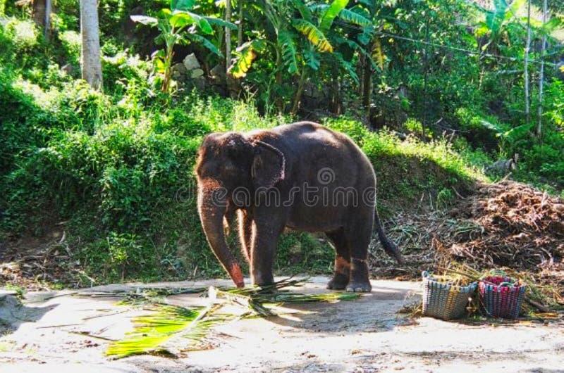 un bambino dell'elefante in un parco ad estate fotografie stock