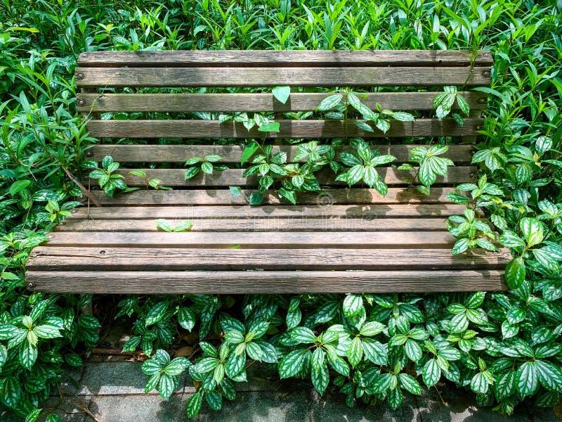 Un banc de rue en bois vieilli entouré de belles plantes d'intérieur, Pilea cadierei, dans un coin ombragé d'un petit parc de rue photos libres de droits