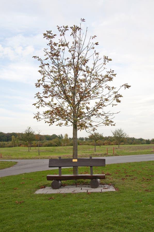 Un banc en bois à un terrain de golf en automne, Allemagne photographie stock libre de droits