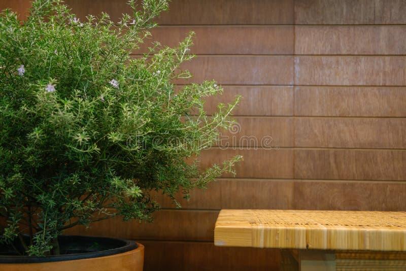 Un banc et un arbre vert de feuilles contre le mur en bois photo stock