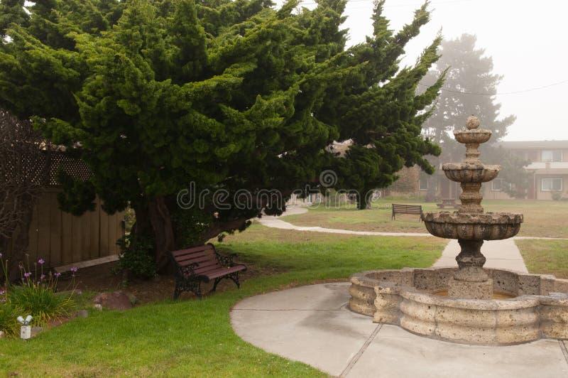 Un banc serein sous un arbre photos stock