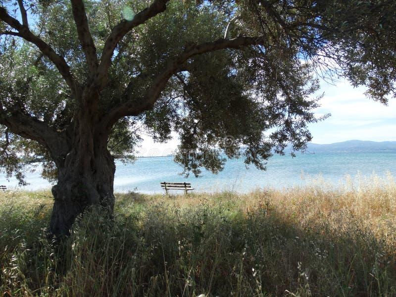 Un banco cerca de la playa imagen de archivo