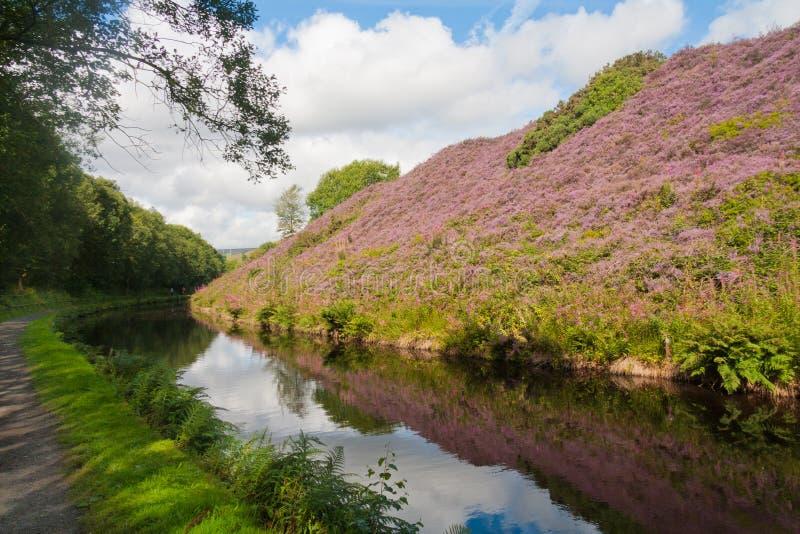 Un banco del brezo por el canal estrecho de Huddersfield momentos antes del túnel de Stanedge, Marsden, Yorkshire, Inglaterra, Re foto de archivo