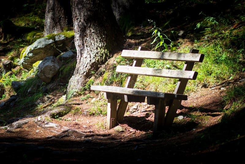 Un banco en el bosque fotografía de archivo libre de regalías