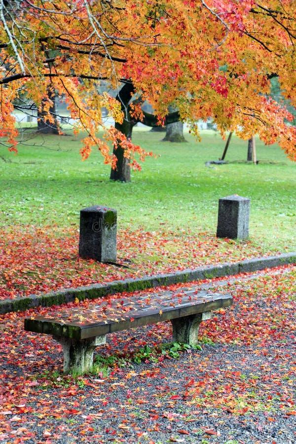 Un banco vuoto nel parco di autunno fotografia stock
