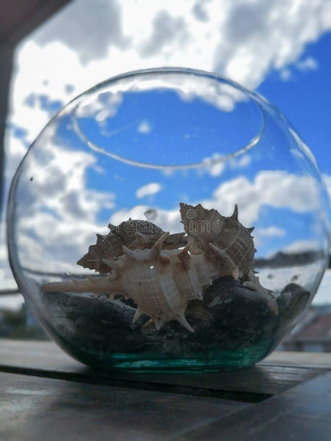 Un barattolo in pieno delle lumache di mare fotografie stock libere da diritti