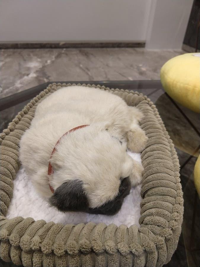 Un barro amasado el dormir fotografía de archivo