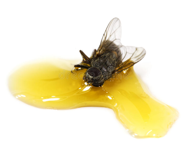 Un bastone della mosca in miele fotografie stock