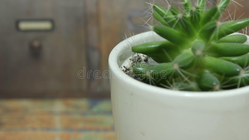 Un beau cactus frais dans le pot blanc images stock