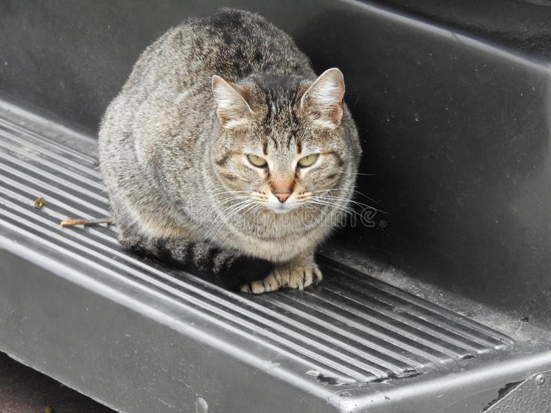 Un beau chat D?tendez l'humeur images stock