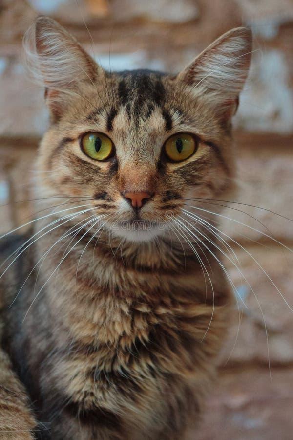 Un beau chat seul se reposant sur la corniche images stock