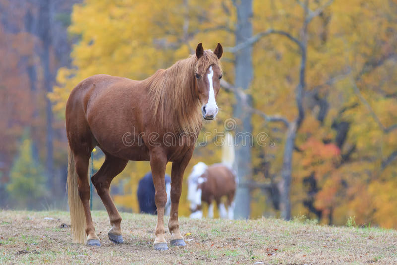 Un beau cheval dans la crique de Cades en parc national de montagne fumeuse images stock