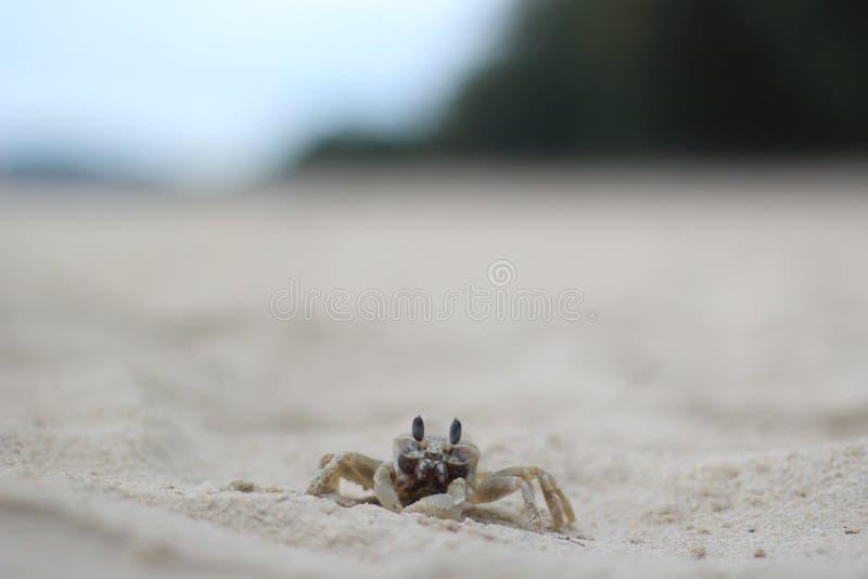 Un beau crabe image stock