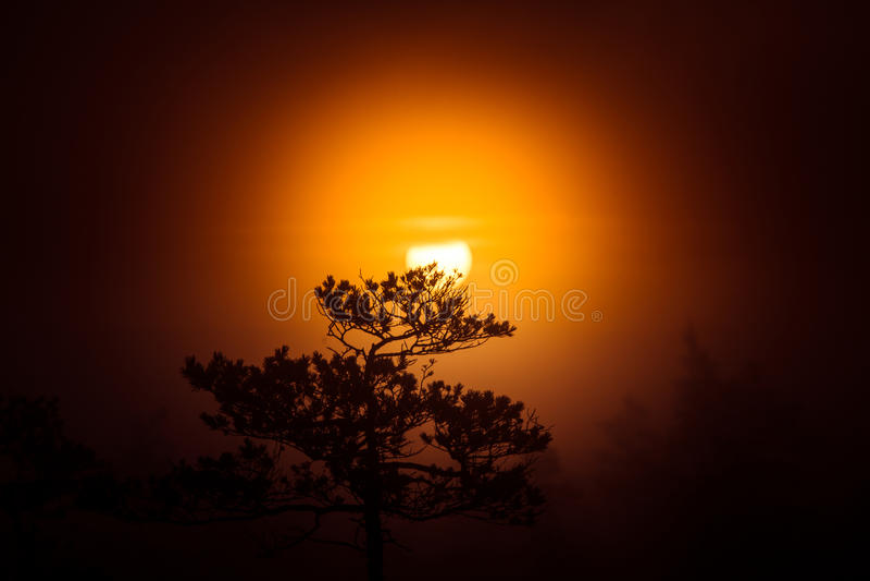 Un beau disque d'un Soleil Levant derrière le pin Paysage foncé et mystérieux de matin Regard apocalyptique photos stock