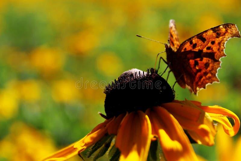 Un beau guindineau sur la fleur images stock